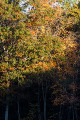 Foliage 19 Oct 2019 (20) (smata2) Tags: autumnfoliage pioneervalley