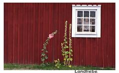 Landliebe (simson60) Tags: schweden