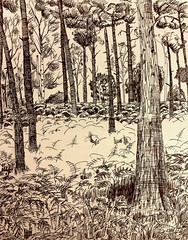 Local woods.  Sepia ink on #moleskine notebook (Alextree) Tags: moleskine ink nature trees woods rspb thelodge sketching
