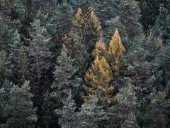 Farbklecks (Naturportal) Tags: panasonic dmcgx8 lumix g vario 100300f4056ii herbst autumn trees bäume wald forest sächsische schweiz