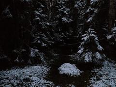 Luonani luonanne - With You in Your Home (Lauri S Laurén) Tags: suomi finland forest taiga sipoo sibbo winter firstsnow paippistenaarnimetsä delicate art artphoto photoart laurilaurén metsä woods talvi finnishartist