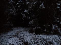 Henkipolku - Spirit Path (Lauri S Laurén) Tags: suomi finland forest taiga sipoo sibbo winter firstsnow paippistenaarnimetsä delicate art artphoto photoart laurilaurén metsä woods talvi finnishartist