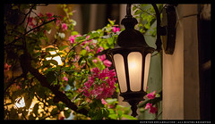 _MG_0283c (Steven Encarnación) Tags: steven encarnacion photographer canon 6d puertorico zeiss planar 85mm f14 street lamp flowers evening