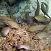 Parrotfish Frenzy!