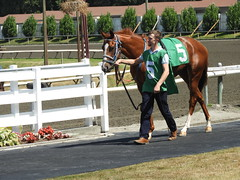 Five and Five is Ten (knightbefore_99) Tags: vancouver bc canada cool west coast eastvan thoroughbred horse cheval hastings racecourse track bet betting awesome five ten fantastic winner