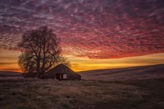 RDB_6807 (rbelstad) Tags: palouse barn farm wheat tree sunset clouds