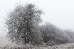 Cold day on the French countryside, fog and frost (Gilles B. Photographe) Tags: december snowfall calm magic romantic frost icy magical fog background winterlandscape snow winterscape morning seasonal wintry imagination snowdrift art tree scenic outdoors wintertree fantasy scenes winterbackground wooden white wood story dream paysage landscape winter season hiver winterscene fleursetplantes january outdoor fairytale weather wintertime freeze cold light scene winternature silhouette beautiful hoarfrost cloud fairy nature texture snowy fresh ice frozen branch