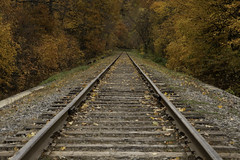 End of the Line (Kevin Tataryn) Tags: rails railroad railway hudson quebec canada vanishingpoint fall autumn leaves leaf ties spikes steel iron road tracks train nature landscape d500 1755