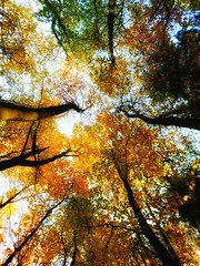 Looking Up (Joseph Pearson Images) Tags: smileonsaturday letitglow trees lookingup
