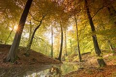 Zijpenberg (Rob Kints (Robk1964)) Tags: 2017 deposbank arnhem autumn beekbergenhoenderlo dieren foliage heath heather heide nederland netherlands rheden