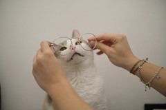 They fit you well (Andrea Fustaneo) Tags: fujifilm xe3 pixco focal reducer speed booster zenith helios 442 58mm f2 cat with glasses
