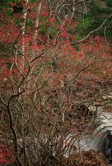 Acadia National Park 2019 (willsdad48) Tags: acadianationalpark nationalparks maine newengland seascape landscape travel travelphotography hiking woodlands nikon nikonusa nikond850 nikonz6 lighthouse