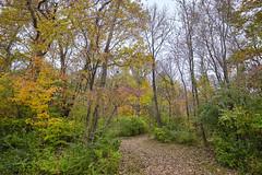 Power Colors - Autumn Woods (Modkuse) Tags: colorful colors autumn autumnleaves autumnlandscape fall fallcolors fallcolor landscape nature natural natureart photoart fineartphotography fineart velvia fujivelvia fujifilmxt2velvia fujifilmxt2velviasimulation fujifilm fujifilmxt2 xt2 fujinon xf1024mmf4rois fujinonxf1024mmf4rois outdoors country cloudyday