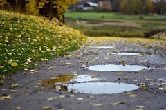 Autumn puddles (Stefano Rugolo) Tags: stefanorugolo pentax k5 pentaxk5 kmount smcpentaxm50mmf17 autumn puddles depthoffield pof manualfocuslens manualfocus manual vintagelens sweden