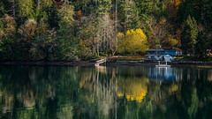Until Next Year (writing with light 2422 (Not Pro)) Tags: fallcolors fall yellow gold serene calm reflections bay inlet lakebay marina dock trees washingtonstate wa richborder rich border landscape sonya7riii sonyphotographing