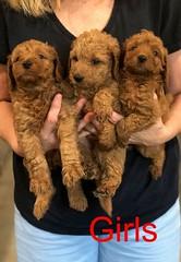 Carly Girls 11-8