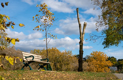 Empty Bench ... Naked Tree (RoTTeN aPPLe WaYFaReR) Tags: toronto ontario canada sony mirrorless sonya7riii sonyilce7rm3 fe24105mmf4goss park afternoon sunny fall day outside light nature art