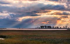 Crepuscular Rays (Daniel Q Huang) Tags: sunrising wetland marshland lake light grassland crepuscular burst landscape waterscape lakescape