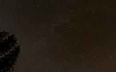 Vista del cel des de Vilallonga de Ter, Girona. (heraldeixample) Tags: heraldeixample bcn spain espanya españa spanien catalunya catalonia cataluña catalogne catalogna girona vilallongadeter pirineu pirineo pyrenees platan platanusxhispanica londonplanetree hybridplane arbre tree árbol alberi arvores bäume træer copaci 树木 estrelles estels estrellas stars cel cielo sky albertdelahoz ngc