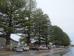 Stansbury Yorke Peninsula. World War One  memorial Norfolk Island Palm trees planted in the main shopping street in 1924. (denisbin) Tags: yorkepeninsula winulta stamsbury oysterbay norfolkislandpines cairn memorial pioneers crop wheat grain
