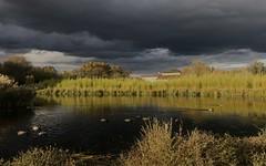Canard colvert - IMG_7884 (6franc6) Tags: occitanie languedoc gard 30 novembre 2019 6franc6 vélo kalkoff vae