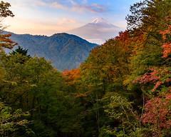 Misaka Fuji autumn scenery (shinichiro*) Tags: 南都留郡 山梨県 日本 20191102ds24339 2019 crazyshin nikonz6 z6 nikkorz2470mmf4s november autumn fuji misaka lakekawaguchi candidate