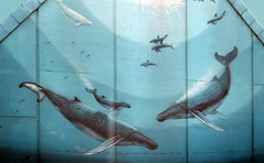 Whaling Wall of Toronto (Bernard Spragg) Tags: whalingwalloftoronto heavenlywaters mural streel painting nature lumix compactcamera blue mammals cco