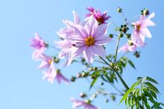 DSCF2326 (Keishi Etoh rough-and-ready photoglaph) Tags: fujifilm xh1 fujifilmxh1 apsc fujinonxf56mmf12r fujinon fuji 840mm primelens fixedfocallengthlens 単焦点 中望遠 flower