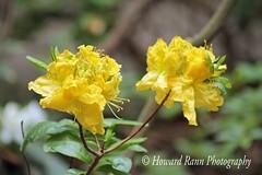Fellows Riverside Gardens (60) (Framemaker 2014) Tags: fellows riverside gardens mill creek park youngstown ohio northeast united states america