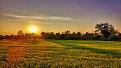 A Roaring Silence (alnesleif2) Tags: meadow field rice cultivated land horizon over countryside sun thailand sukhothai