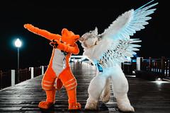 Double Dab (hackdragon) Tags: orange jam sora gryphon night fursuit furry fursuiter bird wolf fox