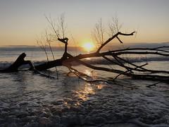 iph8091 (gzammarchi) Tags: italia paesaggio natura mare ravenna lidoadriano alba sole albero tronco riflesso
