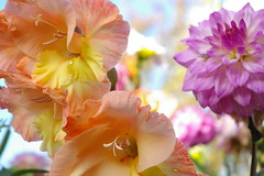 (Balticson) Tags: flowers orange pink purple stamen petals garden allotments blooming pinkflowers purpleflowers orangeflowers