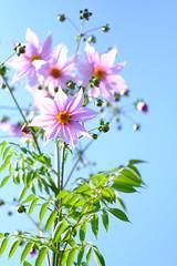 DSCF2336 (Keishi Etoh rough-and-ready photoglaph) Tags: fujifilm xh1 fujifilmxh1 apsc fujinonxf56mmf12r fujinon fuji 840mm primelens fixedfocallengthlens 単焦点 中望遠 flower