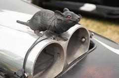 The Rat (johnstewartnz) Tags: canon rockabilly canoneos newbrighton 2019 new brighton cars car 1d 1740mm carshow 100canon 1dmkiii 1dmarkiii 1dmk3 1d3 1diii canoneos1dmkiii rawhitidomain rockabilly2019 1740 ef1740mmf4lusm apsh canonapsh