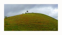 Green (o.dirce) Tags: nature montanha green verde árvores dirce odirce