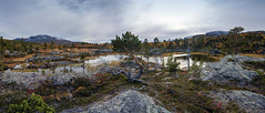 Memories (Kari Siren) Tags: tree pine wetland flark bog autumn sweden