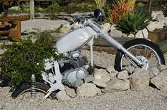 Atlantis Cactus Park (hans pohl) Tags: portugal zambujal sesimbra gardens jardins motos bikes plantes plants
