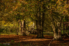 Angles Way-2095 (johnboy!) Tags: 2019 anglesway autumncolours mondaywalk nikond7100 november tamron2470mm