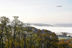 Fog hangs over the river Mosel in the Eifel (Tommysfotografie) Tags: happy enjoy amazing beautiful mood overview view panoramaview panorama nikon7200 nikon behindthelens landscapelove landscapepicture landscapeperfection landscapeview landscapephotography landscapephoto landschap landschaft landscape mountains mountainview morgen foggymorning roadtrip europe europa deutschland tyskland allemagne duitsland germany leafs autumntree tree herfst autumncolors autumn herbstferien herbstfarben farben colors colorsoffall eifel mosel foggylandscape mist nebel foggy