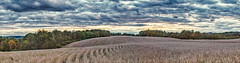 8R9A2139-44PtaMzl1TBbGERk2 (ultravivid imaging) Tags: ultravividimaging ultra vivid imaging ultravivid colorful canon canon5dm3 clouds stormclouds sunsetclouds autumn autumncolors sky rural rainyday countryscene fields farm field trees twilight tree scenic vista pennsylvania pa panoramic landscape lateafternoon painterly