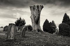 Churchyard skeleton (Allan Rostron) Tags: yorkshire york suburbs churches graveyards gravestones trees acomb