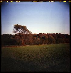 autumn (Ulla M.) Tags: dianaf selfdeveloped selbstentwickelt canoscan8800f toycamera toycam lomo lomography mediumformat mittelformat umphotoart filmphotography analog analogue analogphotography filmisnotdead filmshooter autumn herbst tetenalcolortec