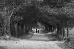 The path of life (Gilles B. Photographe) Tags: mature france natural romantic husband two lady adult female provence summer paysage senior love elder aged couple oldies outdoors older bw woman retired white human monochrome noiretblanc lifestyle landscape happy man old people person elderly outdoor wife fun nb age grandparents exterior personnes romance beautiful male caucasian european lover together nature family blackandwhite relations walk