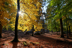 Barbizon path (hbensliman.free.fr) Tags: fontainebleau forest landscape travel foliage france pentax pentaxart nature plants outdoor outside autumn season europe leaf