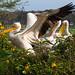 Wings, Lake Naivasha, Kenya