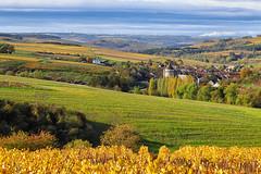 Chitry (Yonne) (jjcordier) Tags: chitry yonne vigne vignoble bourgogne