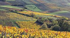Coteaux d'Irancy (Yonne) (jjcordier) Tags: irancy yonne bourgogne vignoble
