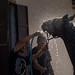 Mann wäscht sein Pferd