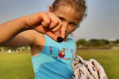 Käfer (Timo Rothe) Tags: käfer beetle
